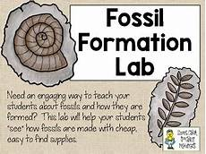 growing a stem classroom fossil formation lab simulate how fossils are formed