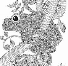 black and white frog drawing by mgl meiklejohn graphics