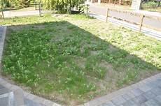 Rasen Neuanlage Unkraut Pur Im Neuen Rasen Hausbau