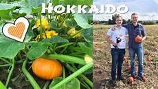 hokkaido kürbis anbauen hokkaido k 252 rbis pflanzen anbau und ernte