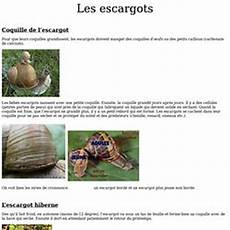 les diff 233 rents escargots pearltrees