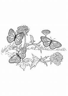 Ausmalbilder Schmetterling Pdf Kostenlos Ausmalbild Fliegende Schmetterlinge Zum Kostenlosen