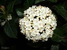 fiore a palla nontuttomaditutto 266 fiori a palla