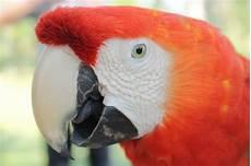 free picture ara parrot portrait feathers