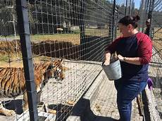 black jaguar white tiger foundation volunteer the bjwt volunteer experience
