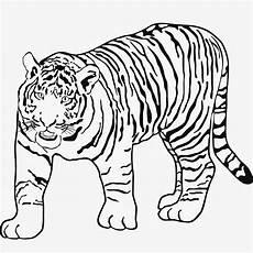 Malvorlagen Tiger Tiger Malvorlagen