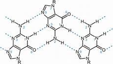 a deeper understanding of pt guanine complexes dalton transactions blog