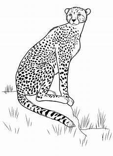 ausmalbilder zum drucken malvorlage gepard kostenlos 1