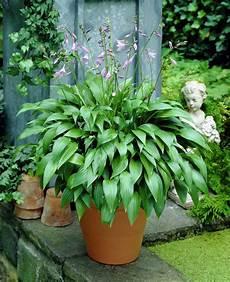 caratterizzano il baldacchino di bernini in san pietro piante da terrazzo sempreverdi 28 images piante