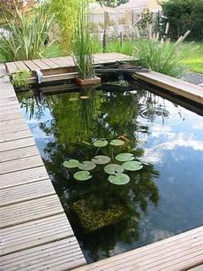 laguna bassin rectangulaire recherche petits