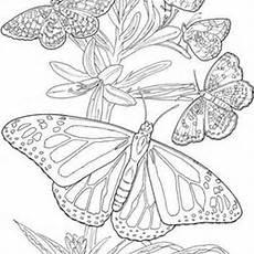 Ausmalbilder Erwachsene Schmetterling Blumen Ausmalbilder Fur Erwachsene Schmetterling