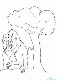 Malvorlagen Urwald Name Ausmalbild Gorilla Im Urwald Zum Kostenlosen Ausdrucken