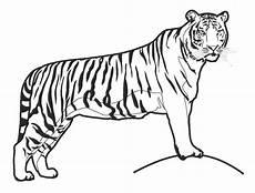 Mewarnai Binatang Harimau Belajarmewarnai Info