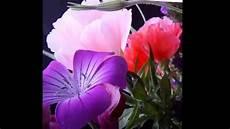 fiori e breve buongiorno con i fiori