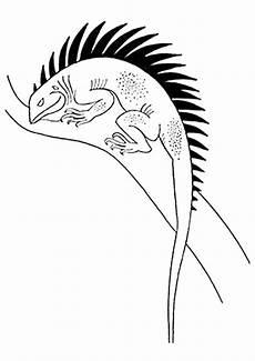 Malvorlagen Gratis Gecko Gecko Ausmalbilder Malvorlagen 100 Kostenlos