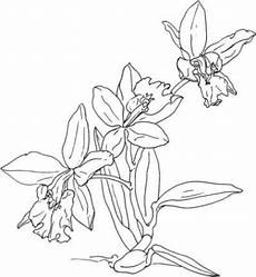 Window Color Malvorlagen Orchideen Ausmalbilder Orchidee Malvorlagen 1 Coloring Pages