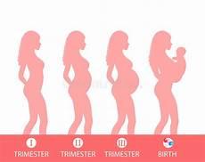 sauna schwangerschaft 1 trimester pregnancy silhouette stage of pregnancy trimesters