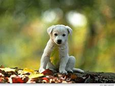 My Toroool HD Wallpaper Of Cute Dog