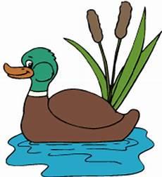 le canard col vert coloriage en ligne pour enfant
