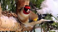 einheimische vögel im winter v 246 gel im winter 2015