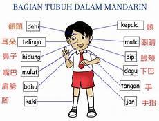 Kosakata Bagian Tubuh Part 1 Belajar Mandarin