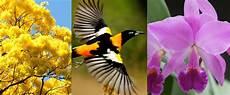 imagen de los simbolos naturales de venezuela 9 datos curiosos que no sab 237 as sobre el araguaney el turpial y la orq la tienda venezolana