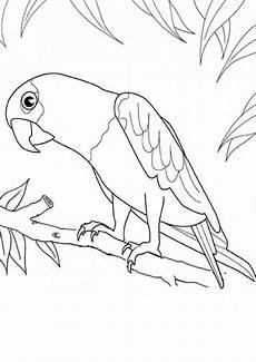 ausmalbilder papagei 15 ausmalbilder tiere
