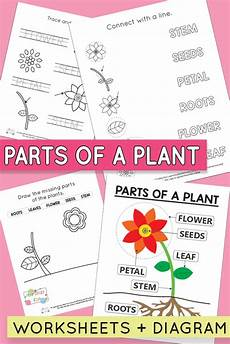 plant parts worksheets for kindergarten 13676 free printable parts of a plant worksheets itsy bitsy