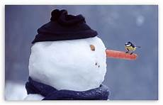 25 most snowman pictures and images