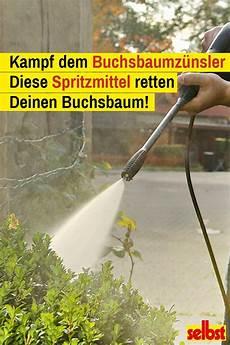 buchsbaumz 252 nsler hausmittel buchsbaumz 252 nsler