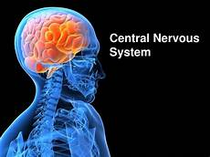 ppt central nervous system powerpoint presentation id 4570952