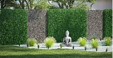 heckenpflanze w 228 hlen hecke pflanzen obi gartenplaner