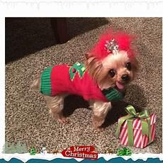 yorkie presents merry christmas yorkshireterrier da minha vida
