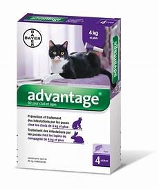 katzen zeckenschutz und katzenflohmittel test 2020