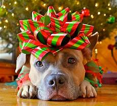 dogs who are so over christmas