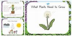 what plants need to grow powerpoint australia plant grow