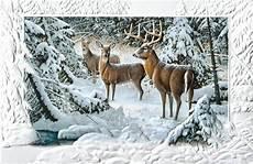 deer christmas cards reindeer christmas cards