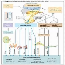Fisiologi Sistem Endokrin Abhique