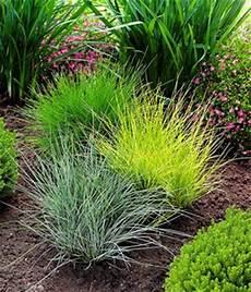 steingarten gräser winterhart winterharde vaste planten a z nu kopen bij baldur