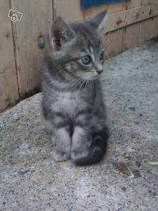 Chatons A Donner Var Nos Amis Les Animaux