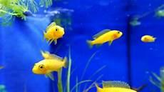 welche fische passen zusammen aquarium 220 berkletterten aquarium fische schwimmen in einem