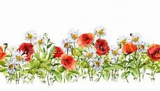 bordure en fleur floral horizontal border watercolor meadow flowers grass