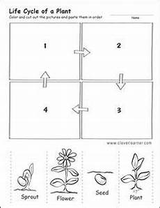 worksheets on plants cycle 13606 flower cycle worksheet cycles plant cycle worksheet cycle for