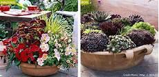 fleur exterieur sans entretien plante en pot exterieur sans arrosage pivoine etc