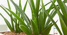 erde oder hydrokultur hydrokultur f 252 r zimmerpflanzen mein sch 246 ner garten