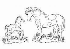 bilder zum ausmalen pferden ausmalbilder pferden und fohlen rooms project