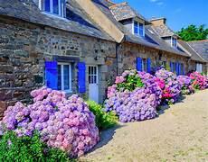 was passt zu hortensien colorful hydrangeas flowers in a small