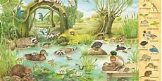 Pflanzen Am Teich Mein Erstes Wimmelbuch Bach Und Teich