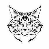 Bobcats Face Drawing  Google Search Cute Drawings
