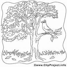 Malvorlagen Herbst Baum Baum Im Herbst Bild Ausmalbilder Gratis